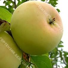 Яблоня Банановое