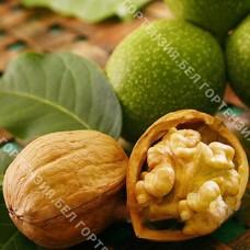 Грецкий орех Идеал (привитый)